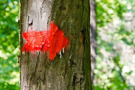 Red arrow drawn on a tree bark in a forest