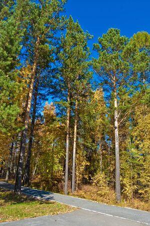 Walkways in the park. Autumn. Stock Photo