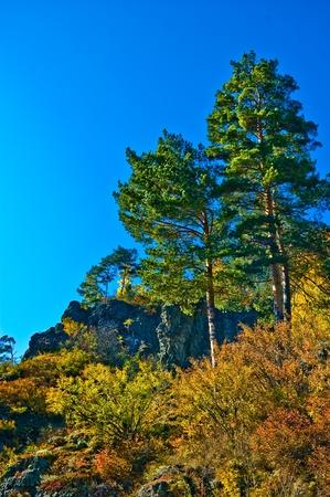 Pine on the rocks Stock Photo