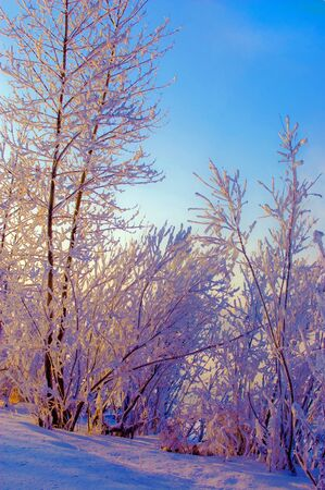 Siberian winter Stock Photo