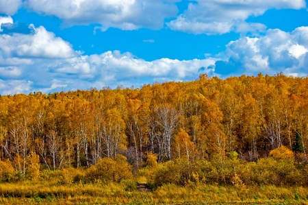 Landscape, autumn, birch, and the sky overcast. photo
