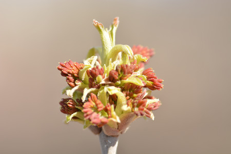 Tree branch ending flower  Buds in the sunlight  Stock Photo