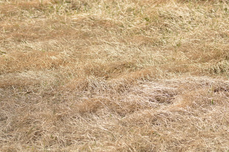 natures:  Natures of dried yellow grass  Stock Photo
