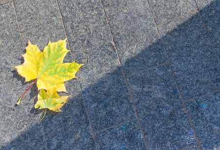 two yellow leaves lying on the paving slabs