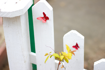 multicolored butterflies on a wooden white fence