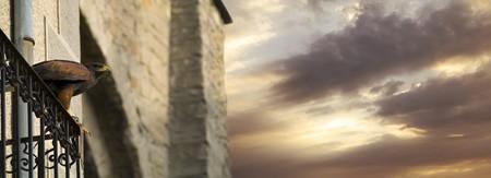 alight: Bella falco scendere su un balcone preparazione t volare verso il cielo Archivio Fotografico