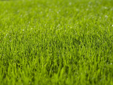 cricket field: Green Grass from a soccer field Stock Photo