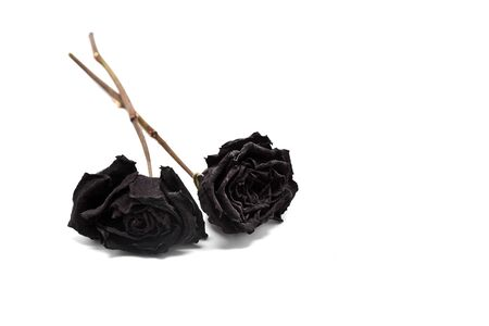 Black Withered Roses photo