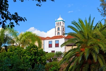 vegatation: Santa Ana Church in Garachico, Tenerife