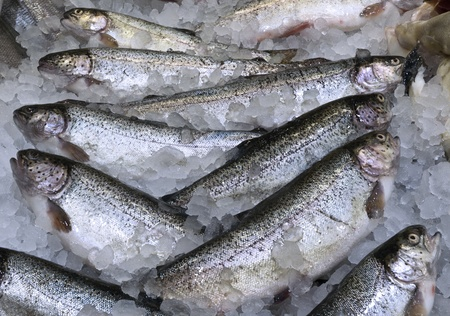 Fresh Trouts with Ice in a Market Counter Stock Photo
