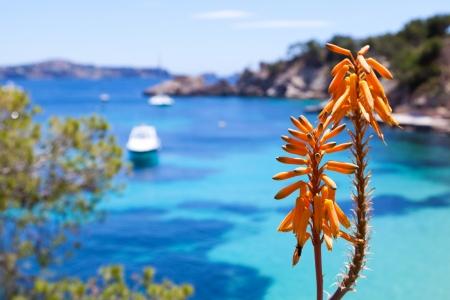 Tropical Orange Flower in Majorca, Spain