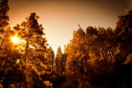 Dark Forest with Warm Sunset Light photo