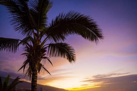 crepuscular: Palm Tree in a Tropical Sunset, Tenerife
