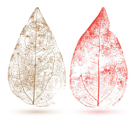 Vector leaf isolated. Transparent style.