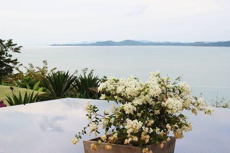 Bougainvillea flower at pool deck