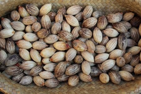 Oil palm seeds Stock Photo