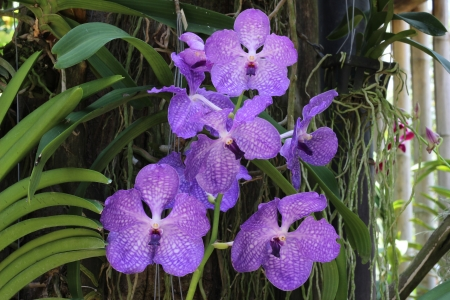A bunch of purple orchid Stock Photo
