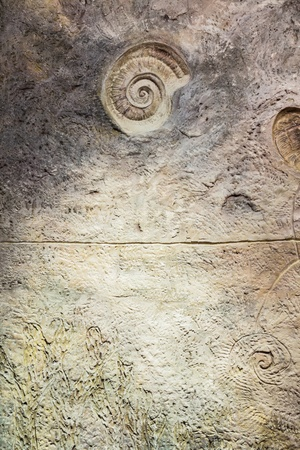 Wall with fossil at butterfly garden, Phuket, Thailand photo