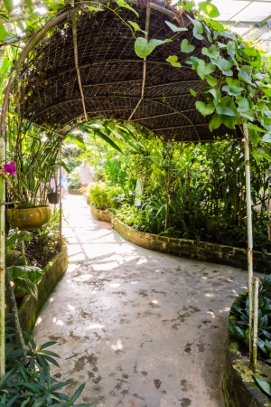 Walk way in butterfly garden with tunnel shape roof shade Stock Photo