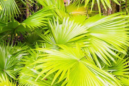 Palm leaf in garden Stock Photo