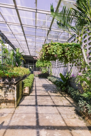 butterfly garden: Tropical green house of butterfly garden, Thailand