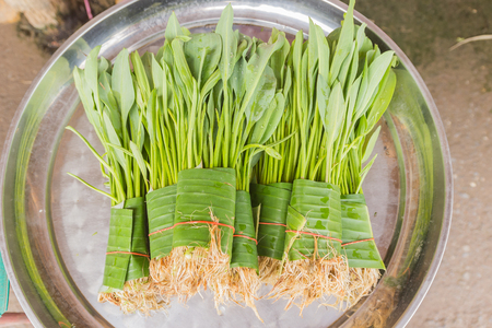 Yellow Velvet Leaf (Limnocharis flava Buch.) Plant or a weed, water, vegetables selling at local Thai market, Northeast of Thailand