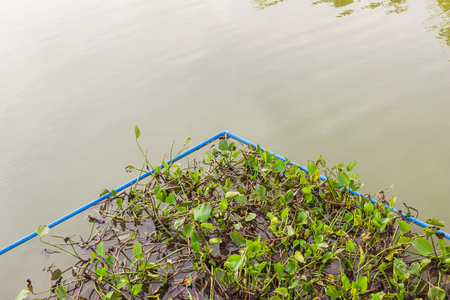 Water Hyacinth surrounding by PVC pipes as it is great idea how to control its expansion growing, Thailand Stock Photo