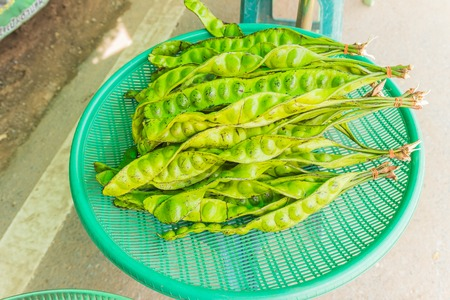 Parkia speciosa for sale at local Thai market Stock Photo