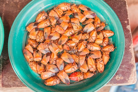 Fried longan stink bug (Tessaratoma papillosa) for sale at local market in Thailand