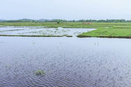 seeding: Rain water in rice field before seeding season, Thailand Stock Photo