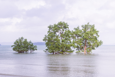 relent: Solitude twilight beach in the evening with mangrove trees, Thailand Stock Photo