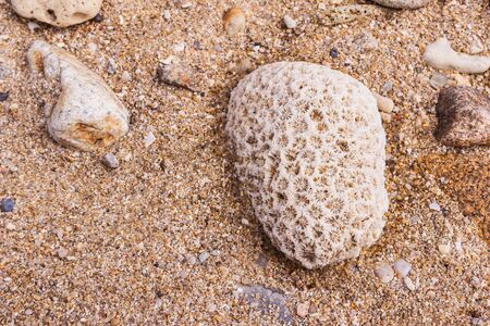 Dead coral flower shape, at Kalim bay, Phuket, Thailand. It can be used for art work