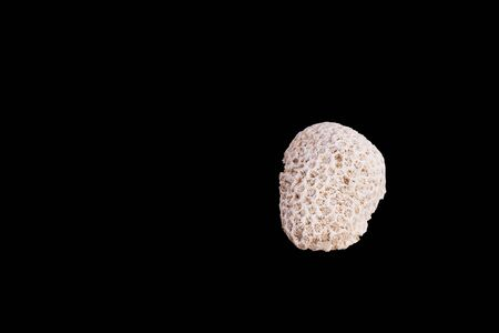 Dead coral flower shape isolated on black background