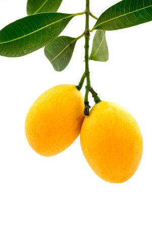 arboles frutales: Marian fruta ciruela aisladas sobre fondo blanco