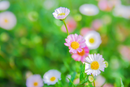 petite fleurs: Blurred small flowers on green bokeh background