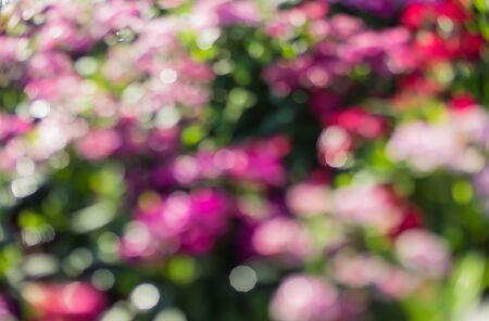 flowers bokeh: Flowers bokeh background