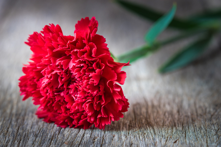 red  carnation: Red carnation flowers on wooden background. Stock Photo
