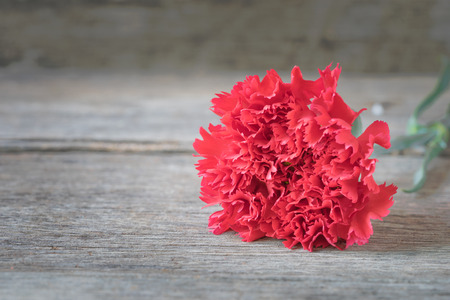 red  carnation: Blur red carnation flowers on wooden background.