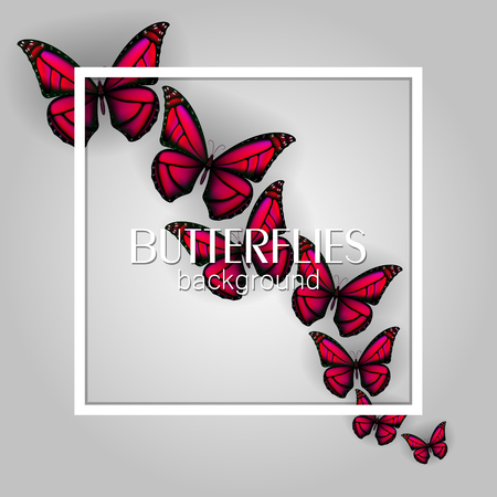 Square white frame banner with colorful butterflies light background 版權商用圖片 - 114806842