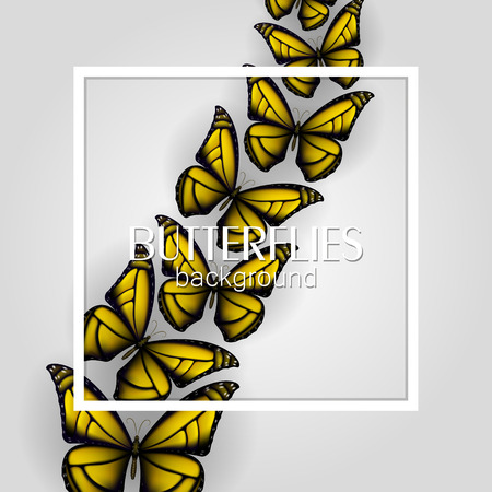 Square white frame banner with colorful butterflies light background