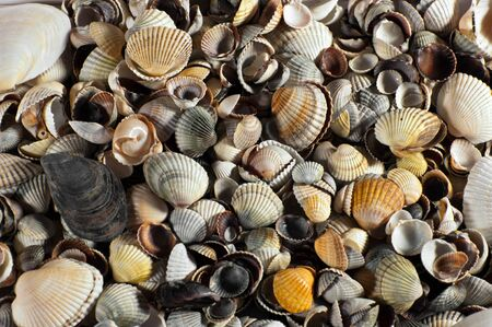 variegated: Background of different, variegated, little sea shells