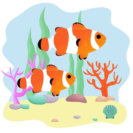 Composition from two clown fish, underwater plants, stones, corals, seashell in vector design. Aquarium, bright, adorable graphic illustration. Nature and wildlife. Editable
