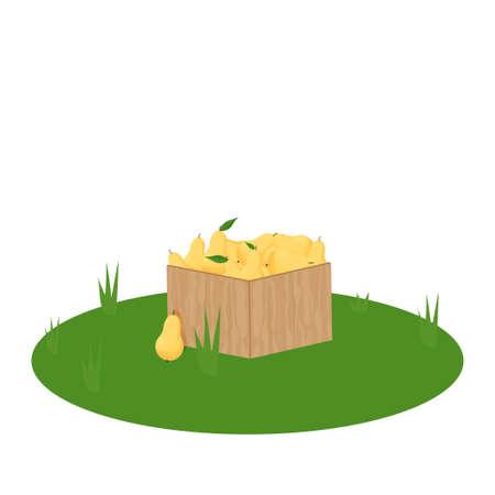 Wooden box full of pears, design element, clipart isolated on white background stock vector illustration. Vector illustration