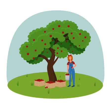 Woman Farmer Pick Apple Harvest to Box. Characters Harvesting Ripe Fruits from Green Organic Tree. Vettoriali