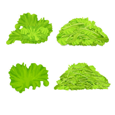 Set of different lettuce isolated on white background. Leaves, shredded salad pile, stack. Realistic, detailed, colorful composition collection. Vector illustration