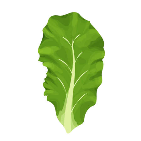 Romain salad, composition of leaves colorful and detailed drawing isolated on white background. Design element, clipart, herbs for decor culinary, menu, promo or advertising. Vector illustration Illustration
