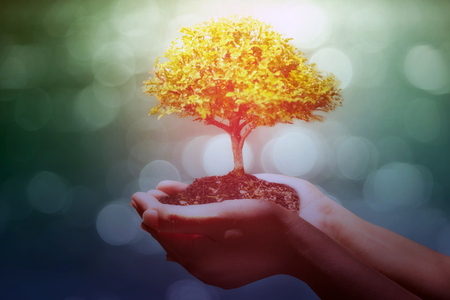 Human hands holding tree on blurred background, Ecology concept, Plant a tree:Trees in hands with nature abstract background Stock Photo