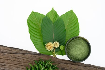 Leaves, flowers, fruits and liquid of Kratom or mitragynine on white background isolated. The leaves eaten as a drug It is a medicinal plant and is addictive.