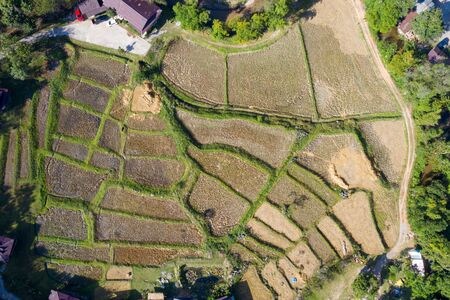 Terraced rice field in harvest season in thailand. Top view or aerial shot of fresh green and yellow rice fields.