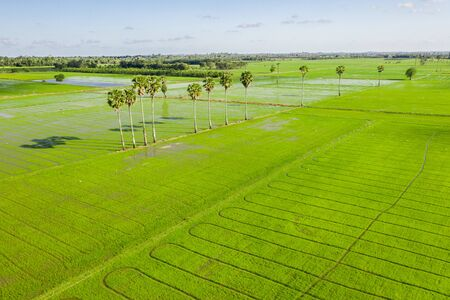 Rice field green grass blue sky cloud cloudy landscape background. Image of beautiful Terraced rice field in water season and Irrigation from drone,Top view of rices paddy field Banque d'images